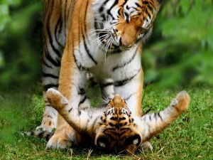 wpid-nice_pictures_of_baby_animals_and_their_mothers_2.jpg